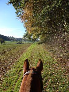 schönste Aussicht zwischen 2 Pferdeohren