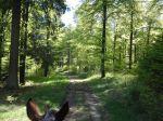 noch ein wenig mehr schöner Maienwald