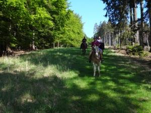 Auf und ab geht es durch den Arnsberger Wald nach Neuhaus