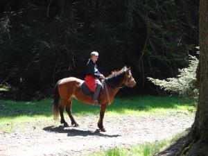 und forsch geht es weiter- ein Bild von einem Mann und Pferd! :-)