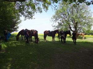 Mittagspicknick- habt acht auf euer Essen - big Horse is watching you!