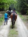 autsch! spitziger Schotter- wer sein Pferd liebt der führt auch mal