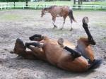 und dann auch den Pferden ihr Vergnügen