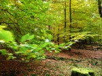 und zurück geht es durch den grünen Forst