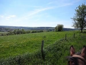Ausblick über Pferdeohren