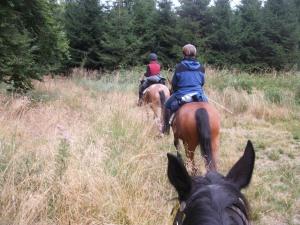 auch die anderen Pferde warten auf Reiter, die sich von Ihnen schaukeln lassen möchten...