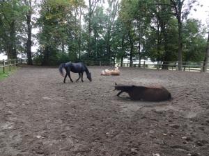 kaum angekommen: das Schönste am Pferde-Feierabend!