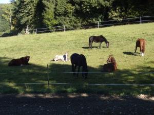 """... trotzdem, meine Pferdchen bleiben kleine """"Heimsch..""""- Zu Hause ist´s eben immernoch am Schönsten!"""